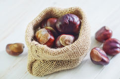 Chestnuts. Chesnuts in the suck, dry chestnuts Stock Images