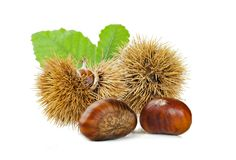 Chestnuts and chestnut bur. stock photo