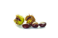 Chestnuts with chestnut leaf. On white background Stock Image