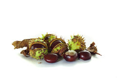 Chestnuts with chestnut leaf. On white background Royalty Free Stock Photo