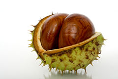 Chestnuts Close Up Isolated Royalty Free Stock Photo