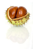 Chestnuts Close Up Isolated Royalty Free Stock Photography