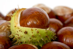 Chestnuts close up isolated Stock Photos