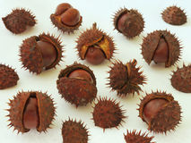Chestnuts. Close up of chestnuts isolated on white background Royalty Free Stock Image