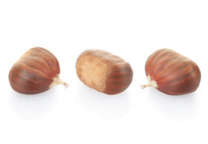 Chestnuts collection Royalty Free Stock Photo