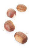 Chestnuts collection Stock Photography