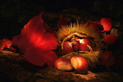 Chestnuts composition. Stock Images