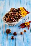 Chestnuts and cones in basket. On wooden background Royalty Free Stock Photography