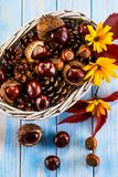 Chestnuts and cones in basket. On wooden background Stock Image