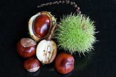 Chestnuts & Conkers Stock Photography