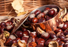 Chestnuts and copper kettle, autumn concept image Royalty Free Stock Photography