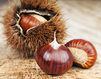 Chestnuts and curly Stock Photos