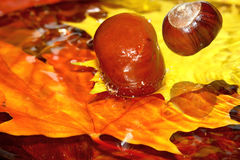 Chestnuts dropped to water. Royalty Free Stock Photo