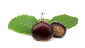 Chestnuts Edible Nuts On White Stock Photos