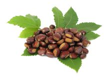Chestnuts edible nuts on white Royalty Free Stock Images