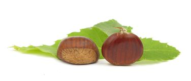 Chestnuts edible nuts on white Stock Image