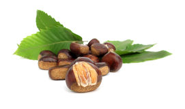 Chestnuts edible nuts on white Stock Photo