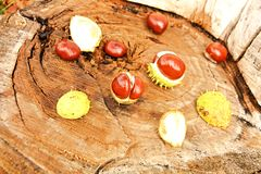 Chestnuts Royalty Free Stock Photography