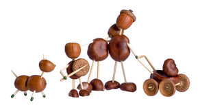 Chestnuts family. Royalty Free Stock Photography