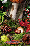Chestnuts On The Forest Floor vertically Stock Images