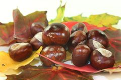 Chestnuts Royalty Free Stock Images