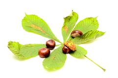 Chestnuts and green leaf Stock Images