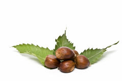 Chestnuts and green leaves. Some chestnuts with some of its leaves isolated on white background Stock Photography