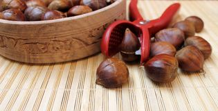 Chestnuts for grilling cut with a special knife Stock Image