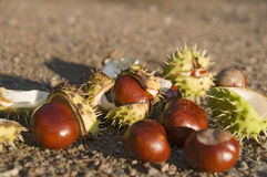 Chestnuts on ground Stock Image
