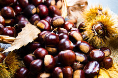 Chestnuts. A group of fresh chestnuts Royalty Free Stock Photos