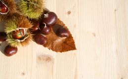 Chestnuts. Group of many chestnuts with autumn leaves Royalty Free Stock Photography
