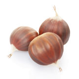Chestnuts group Stock Image
