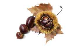 Chestnuts. Groups of chestnut nuts on white close up Royalty Free Stock Photography