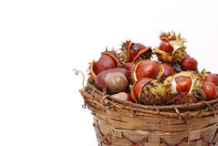 Chestnuts harvest Stock Images