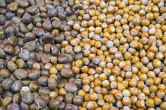 Chestnuts and hazelnuts Stock Photo