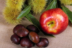Chestnuts hedgehog with apple. Background with jute fabric with chestnuts and apple on foreground Stock Photo