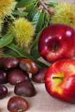Chestnuts hedgehog with apples. Background with jute fabric with chestnuts and apple on foreground Royalty Free Stock Images