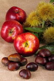 Chestnuts hedgehog with apples. Background with jute fabric with chestnuts and apple on foreground Stock Image