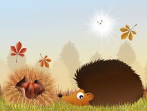 Chestnuts and hedgehog Stock Image