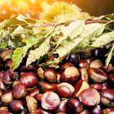 Chestnuts and hedgehog with leaves Royalty Free Stock Photos