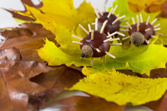 Chestnuts hedgehogs Royalty Free Stock Photo