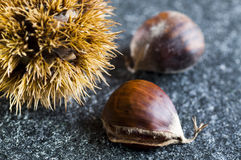 Chestnuts and hedgehogs Stock Photos