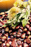 Chestnuts and hedgehogs with leaves Royalty Free Stock Image