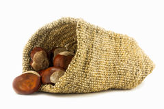 Chestnuts in hessian sack. Sample stock images