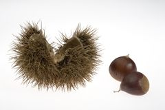 Chestnuts with husk. Chestnuts still in their husk with leaves Royalty Free Stock Photos