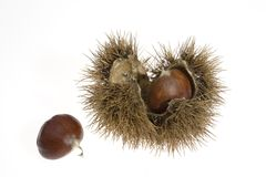 Chestnuts with husk Royalty Free Stock Photos