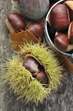 Chestnuts. On husk and another in a little bucket on a wooden board Stock Image