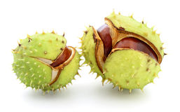 Chestnuts in husk. Chestnuts in husk isolated on white background Stock Photo