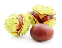 Chestnuts in husk. Chestnuts in husk isolated on white background Stock Photography