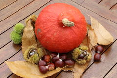 Chestnuts, husk, pumpkin and dead leaves. In autumn Royalty Free Stock Images